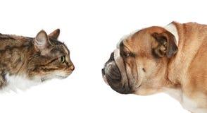 Gato y perro en un fondo blanco imagen de archivo libre de regalías