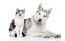 Gato y perro en un fondo blanco Foto de archivo