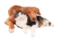Gato y perro en una actitud íntima, aislada en blanco Imágenes de archivo libres de regalías