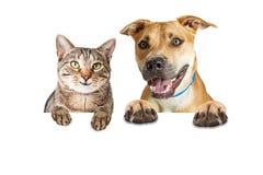 Gato y perro felices sobre la bandera blanca fotografía de archivo libre de regalías
