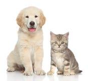 Gato y perro junto Fotografía de archivo libre de regalías