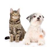 Gato y perro junto Aislado en el fondo blanco Imagen de archivo libre de regalías