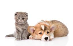 Gato y perro junto En el fondo blanco Imagen de archivo