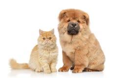 Gato y perro junto en un fondo blanco Foto de archivo libre de regalías