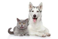 Gato y perro junto en un fondo blanco Imágenes de archivo libres de regalías