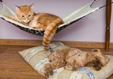 Gato y perro que duermen pacífico cerca Foto de archivo libre de regalías