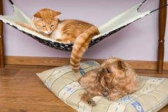 Gato y perro que duermen pacífico cerca Fotografía de archivo libre de regalías