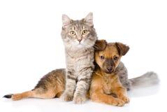 Gato y perro que miran la cámara En el fondo blanco Foto de archivo libre de regalías