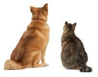 Gato y perro que miran para arriba Imagen de archivo libre de regalías