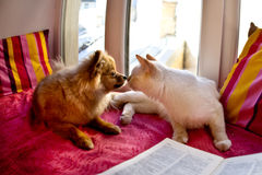 Gato y perro que ponen en la ventana Imágenes de archivo libres de regalías