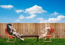 Gato y perro que se relajan Foto de archivo libre de regalías