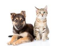 Gato y perro que se sientan en frente Aislado en el fondo blanco Foto de archivo
