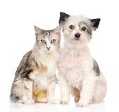 Gato y perro que se sientan junto Aislado en el fondo blanco Foto de archivo
