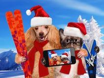 Gato y perro que toman un selfie así como un smartphone Fotografía de archivo