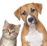 Gato y perro. Retrato del primer Imagenes de archivo