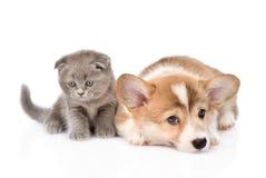 Gato y perro tristes junto Aislado en el fondo blanco Foto de archivo libre de regalías