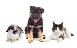 Gato y perro y conejo Imagen de archivo
