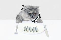 Gato y pescados Foto de archivo