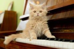 Gato y piano Fotos de archivo