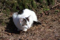 Gato y picea. ocultación. Foto de archivo