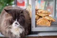 Gato y postre Imagen de archivo