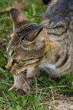 Gato y ratón. Imagen de archivo libre de regalías