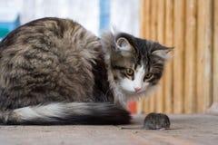 Gato y ratón Fotografía de archivo libre de regalías