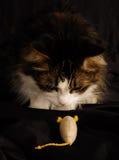 Gato y ratón 2 Fotografía de archivo libre de regalías