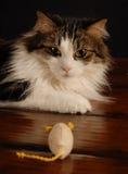 Gato y ratón 4 Foto de archivo