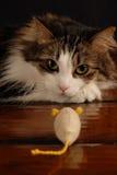Gato y ratón 5 Imagen de archivo libre de regalías