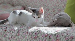 Gato y ratón Fotos de archivo