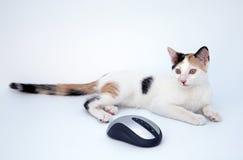 Gato y ratón Imagenes de archivo