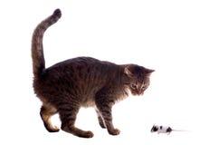 Gato y ratón aislados imagen de archivo