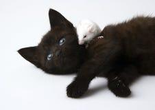 Gato y ratón blanco fotografía de archivo libre de regalías