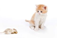 Gato y rata Fotografía de archivo