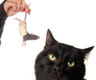 Gato y rata Imagen de archivo libre de regalías