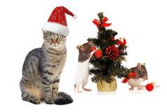 Gato y rata de Santa de la Navidad Imagenes de archivo
