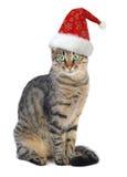 Gato y rata de Santa de la Navidad Fotos de archivo