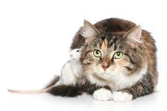 Gato y rata en un fondo blanco Fotos de archivo