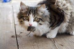 Gato y ratón Foto de archivo libre de regalías