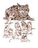 Gato y ratones Imagen de archivo libre de regalías