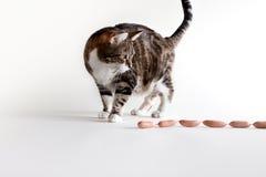 Gato y salchichas Imagen de archivo