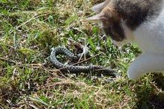Gato y serpiente Imagenes de archivo