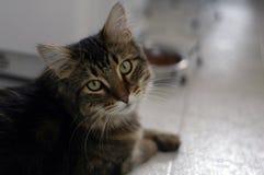 Gato y su alimento Fotos de archivo libres de regalías