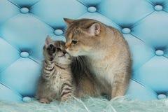 Gato y sus pequeños gatitos imagen de archivo
