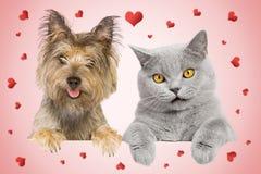 Gato y tarjeta del dag Imagen de archivo libre de regalías