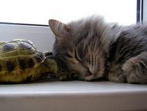 Gato y tortuga Foto de archivo