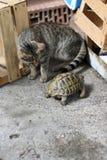 Gato y tortuga Imagenes de archivo