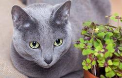 Gato y trébol con hojas cuatro fotos de archivo