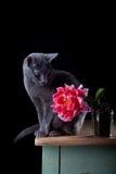 Gato y tulipán Imágenes de archivo libres de regalías